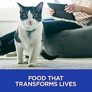 food that transforms lives cat feline