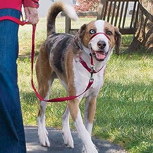 gentle leader head collar headcollar leash