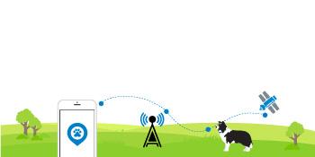Tractive GPS Tracker für Katzen mit Servicegebühr