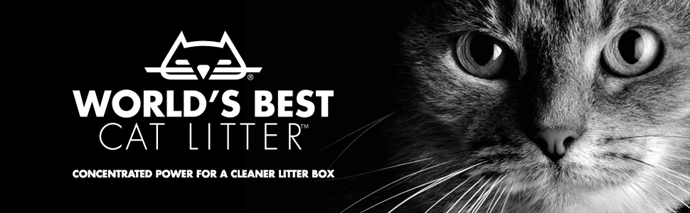 world's best cat litter all natural