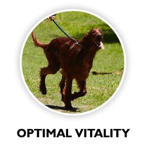 Optimal vitality