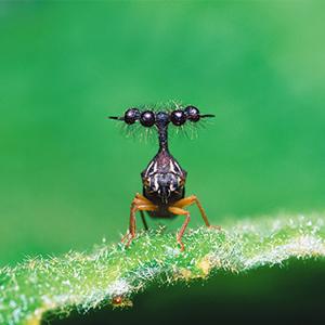 世界でいちばん変な虫画像③