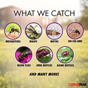 What We Catch