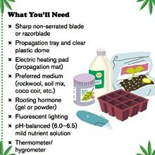 Amazon Com Cannabis A Beginner S Guide To Growing Marijuana