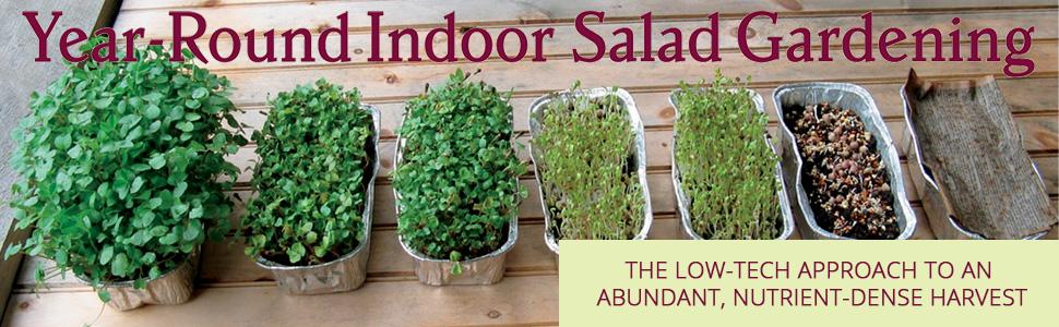 nutrient-dense, salad, greens, grow, organic, sprouts, spinach, microgreens, buckwheat, arugula