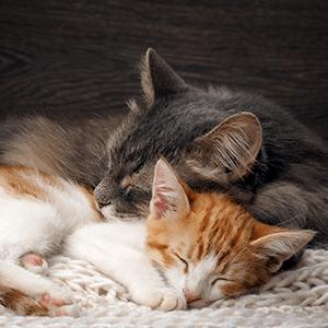 stop urine spraying, cat urine spraying, feliway, feliway multicat, cat pheromones