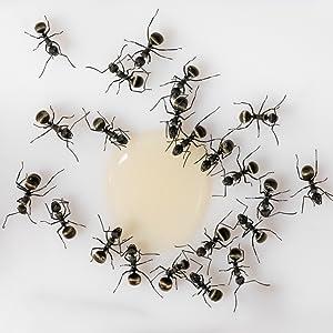 fourmis mangeant goutte de gel fipronil sirop