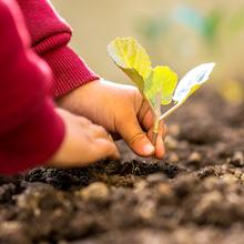 vegtrug,rasied bed, planter,garden,garden pot,