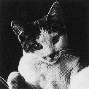 猫語の教科書 ポール・ギャリコ 猫
