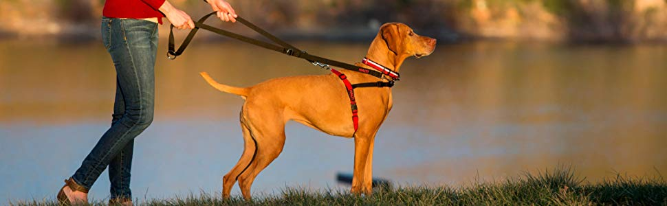 dog leash double-ended halti harness headcollar collar lead company of animals no pull stop pulling