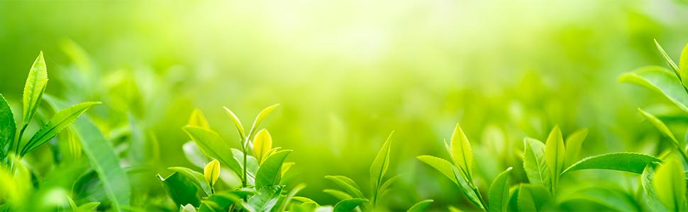 日東紅茶イメージ