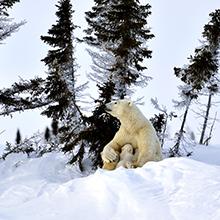 北極スマイル・南極スマイル カレンダー 2021