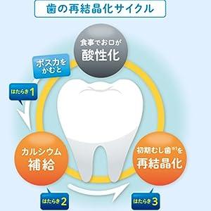 歯の再結晶サイクル