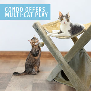 Condo offers multi cat play