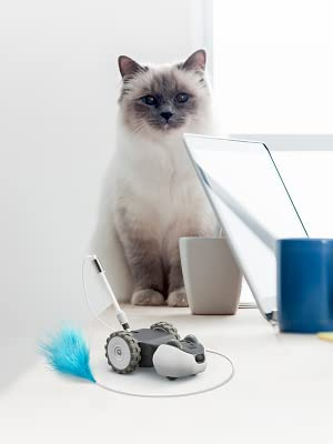 cat toy, cat interactive, mousr, petronics, robotic mouse, interactive cat toy, best cat toy