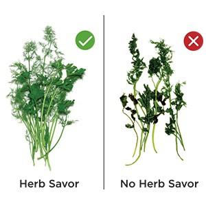 Amazon.com: Herb Saver Best Keeper for Freshest Produce