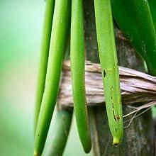 Vanilla Beans, Vanilla Extract, Vanilla, Baking Vanilla, Rodelle, Rodelle Vanilla, Gourmet Vanilla