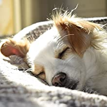 puppy asleep in the sun on a bed