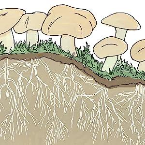 Julia Rothman Nature Anatomy Mycelium
