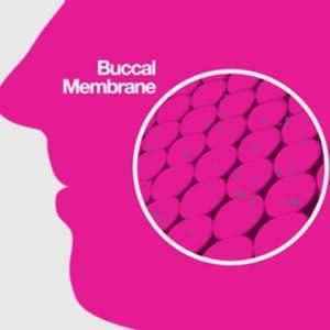 Buccal membrane