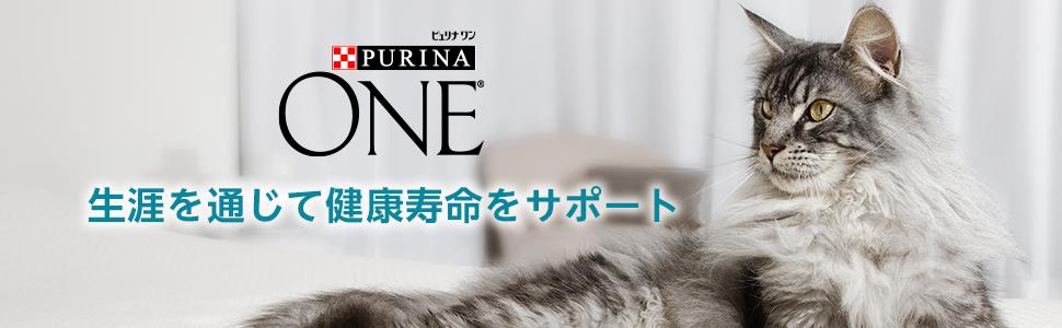 ONE cat