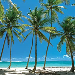 tropical island beach beaches sunny sunshine sand palmtree vacation ocean waves travel tourism