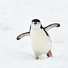 北極スマイル・南極スマイル カレンダー 2020 9月