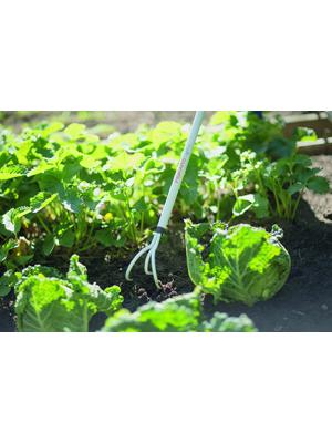 Fiskars Light Cultivador, Longitud: 164 cm, púas de acero/Mango de ...