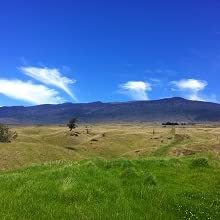 hawaii grassland