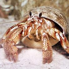 hermit crabs heater