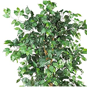 nearly natural ficus tree - Ficus Trees