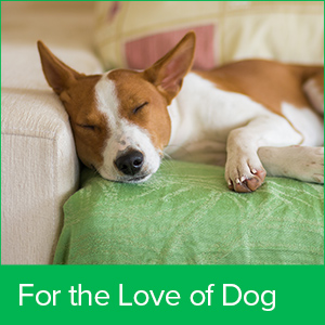Dog Cat Pets Comfort humidifier