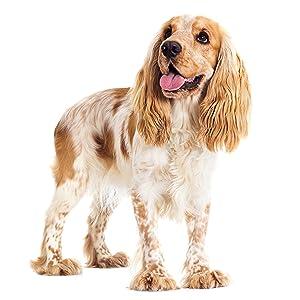 Alimento seco para perros adultos de razas pequeñas y medianas, con pollo