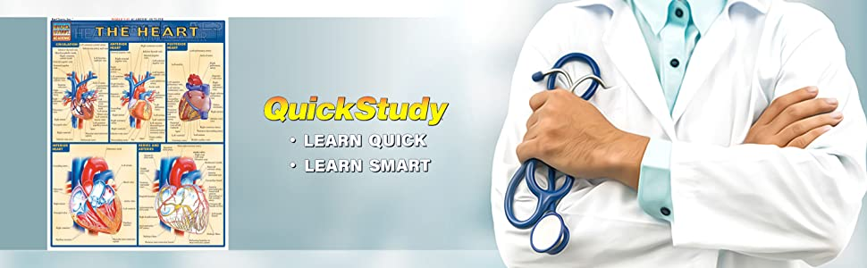 QuickStudy The Heart Study Guide Reference Guide Medical Profession Guides Med BarCharts Publishing