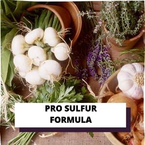 onion oil, castor oil, hair oil, hair growth oil, hair oil for hair growth,  Best onion hair oil