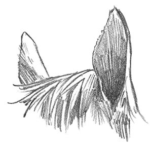 EARS Render the horse's forelock hair with long, slightly curving strokes. Then shade the interior