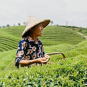 numi organic green tea farm fair trade china white oolong jasmine pearls 2