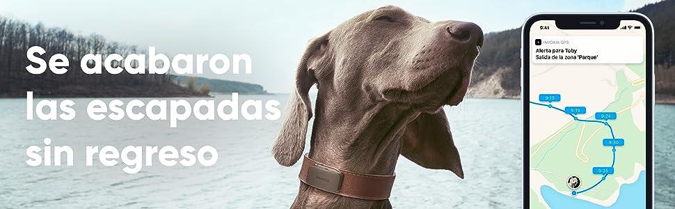 Invoxia Pet Tracker, Localizador GPS perros, rastreador GPS gatos, Collar GPS mascotas,