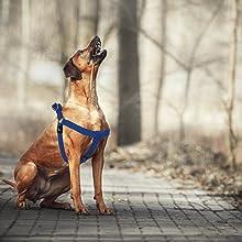 Kruz PET Fully Adjustable Step-in Puffy Mesh Harness