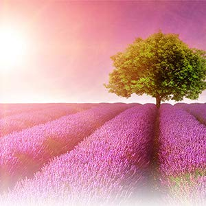 lavender yardley soap essential oils bath products
