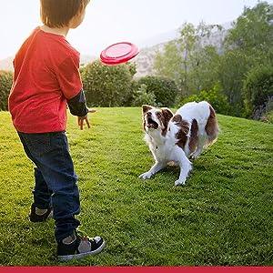 Amazon.com : Hill's Science Diet Chicken Jerky Strips Dog