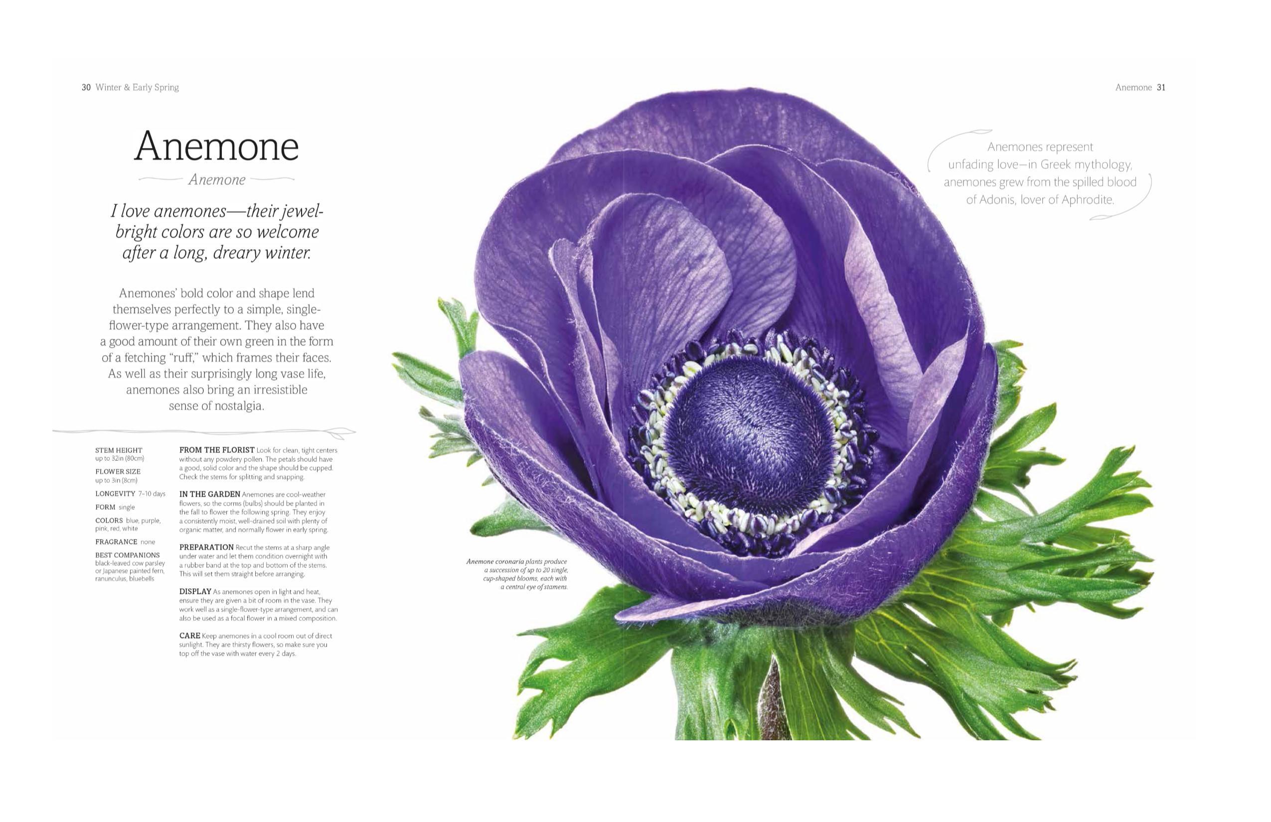 The Flower Book Rachel Siegfried 9781465445483 Amazon Books