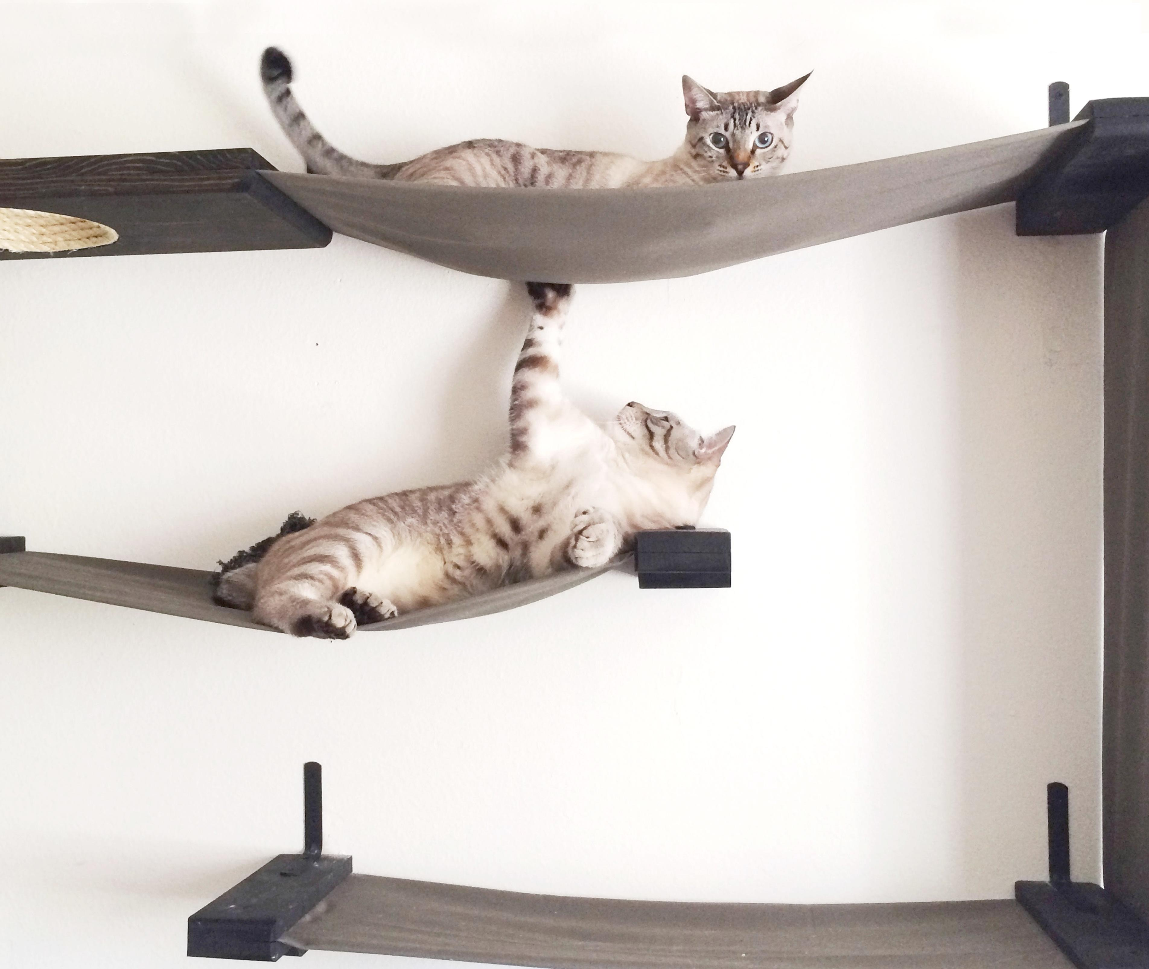 catastrophicreations hammock lounger handcrafted wall mounted cat furniture. Black Bedroom Furniture Sets. Home Design Ideas