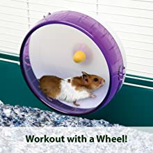 workout with a hamster wheel
