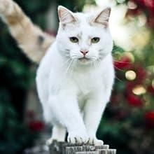 CAT AN OBLIGATORY CARNIVORE