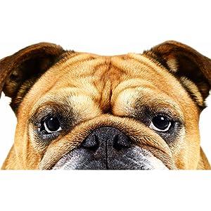 Bulldog,Skincare, Grooming, Mens