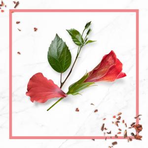 Extrait d'hibiscus bio