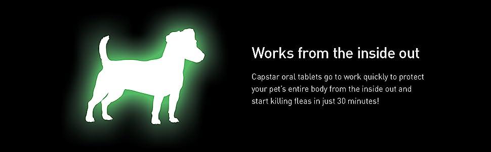 dog flea treatment; flea and tick treatment; captsar flea drops