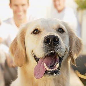 Entra/înement au cliqueur pour chiens chats chevaux FRDL01P Dogsline Clicker professionnel colori noir