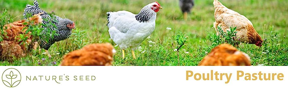 poultry header